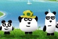 3 Pandy w Brazylii