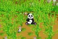 Farma pandy