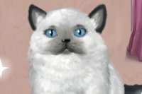Pani Kitty